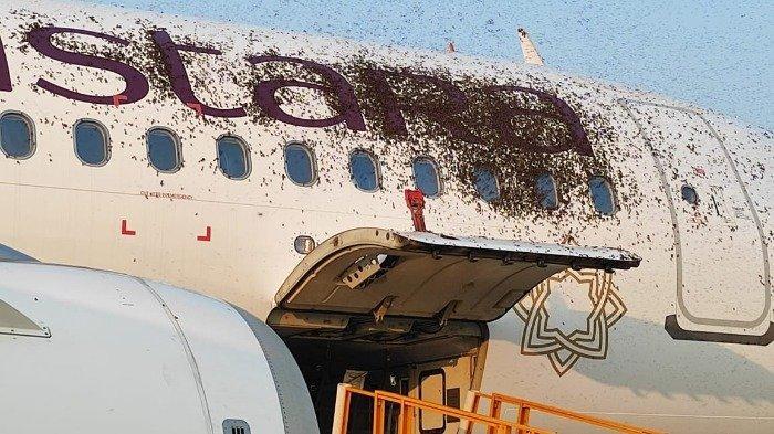 Diserang Kawanan Lebah, 2 Pesawat Ini Terpaksa Tunda Penerbangan hingga 1 Jam