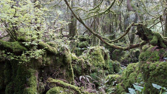 Hutan di Inggris Ini Jadi Inspirasi Film The Lord of the Rings, Intip Keunikannya