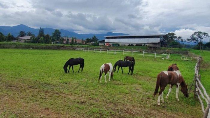 Peternakan dan tempat berkuda di The Ranch Cisarua