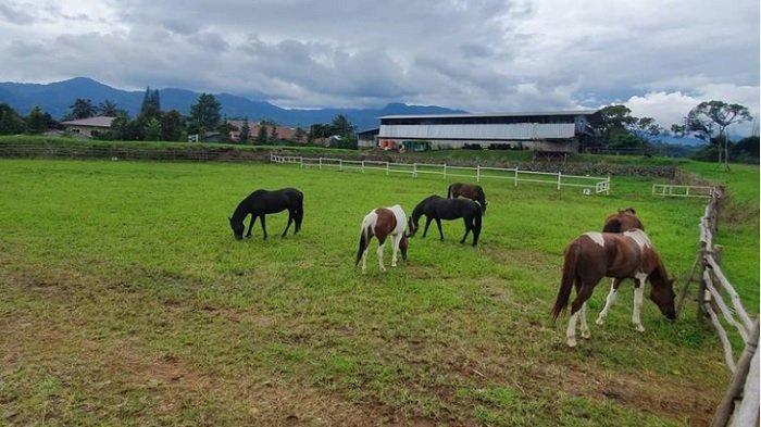 Memanah hingga Berkuda, Berikut Keseruan di The Ranch Cisarua untuk Dinikmati Bersama Keluarga