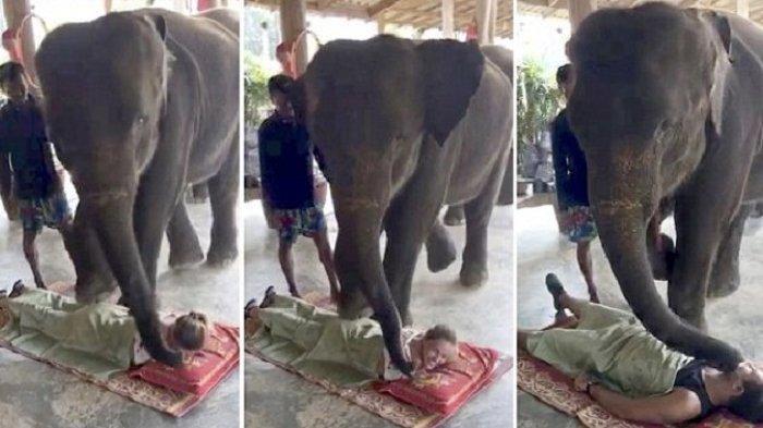 Tak Seindah yang Dibayangkan! Begini Realita Kejam Dibalik Wisata Menunggang Gajah di Thailand