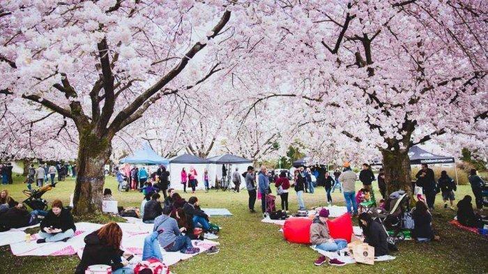 Simak! Jadwal Bunga Sakura Mekar pada 2020 di Kota-kota Jepang