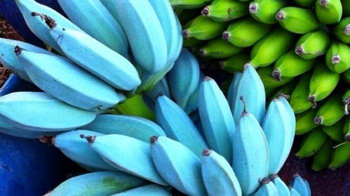 Pisang Biru, Buah yang Rasanya Mirip Es Krim dan Bermanfaat Bagi Kesehatan