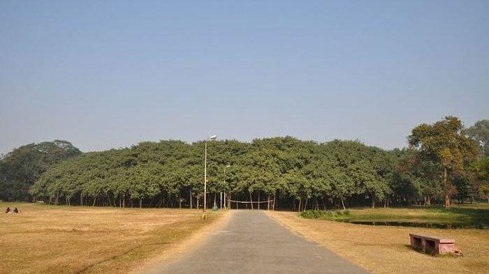 Pohon Beringin Terbesar di Dunia Ini Bisa Membentuk Hutan Sendiri, Seperti Apa Ya?