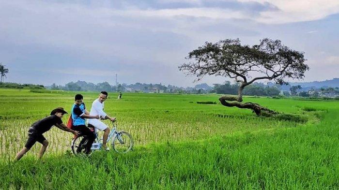 Pohon Pengantin, Pohon Cantik yang Menjadi Simbol Cinta Abadi di Salatiga, Jawa Tengah