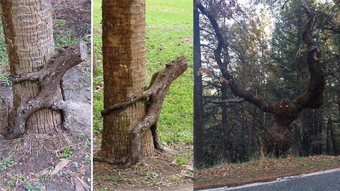 13 Foto Ini Ungkap 'Wajah' Lain dari Berbagai Wujud Pohon, Bikin Mata Jadi Terkecoh!
