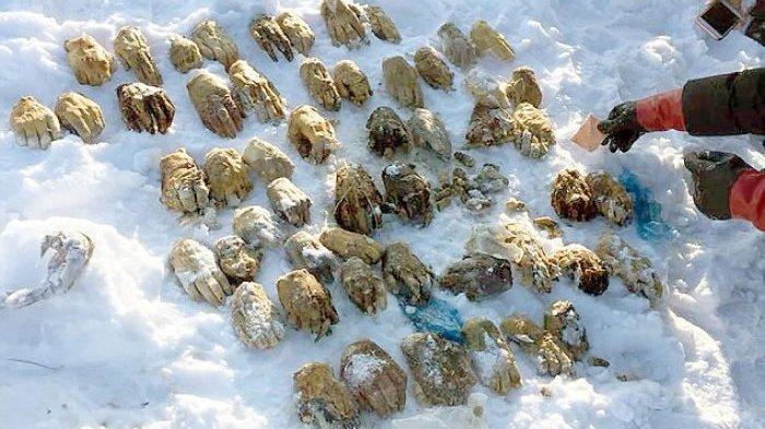 Horor! 54 Potongan Tangan Ditemukan di Dalam Tas, Timbulkan Kecurigaan hingga Misteri