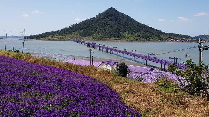 Pulau Banwol, Destinasi Wisata Serba Ungu yang Eksotis dan Instagramable di Korea Selatan