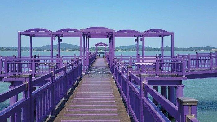 Disulap Jadi Serba Ungu, Pulau Banwol di Korea Selatan jadi Incaran Wisatawan Lokal