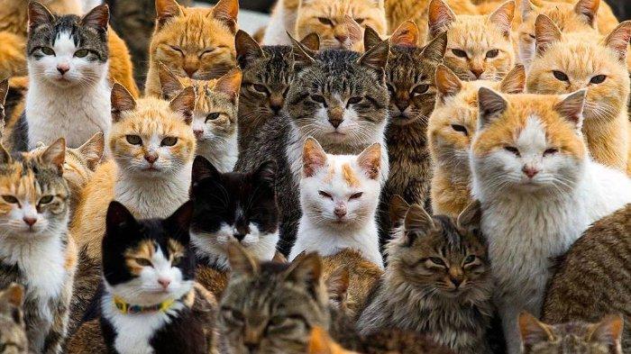 Bagaimana Cara Menemukan Kucing Hilang? Metode Unik dari Jepang Ini Terbukti Berhasil