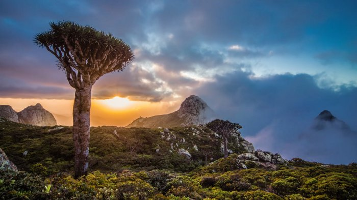 4 Destinasi Wisata Terbaik di Kawasan Timur Tengah, Socotra di Yaman hingga Hegra di Arab Saudi