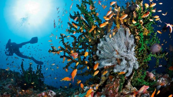 Rekomendasi 5 Spot Diving Paling Cantik di Pulau Weh, Sabang