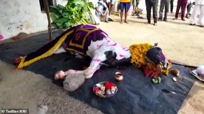 Langgar Aturan Lockdown, Ratusan Penduduk India Hadiri Pemakaman Kuda