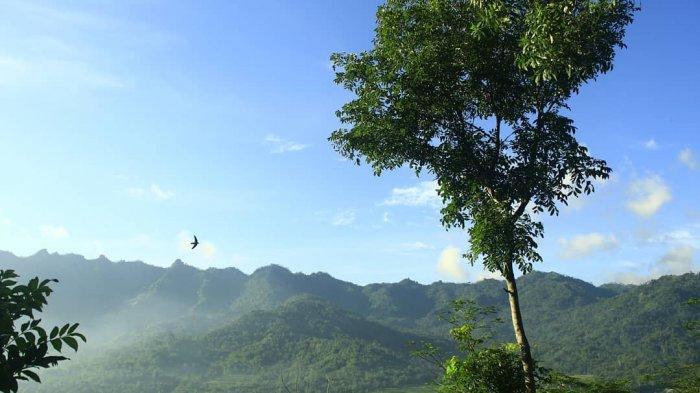Menelusuri Desa Candirejo Magelang, Cocok untuk Kamu yang Bosan dengan Suasana Kota
