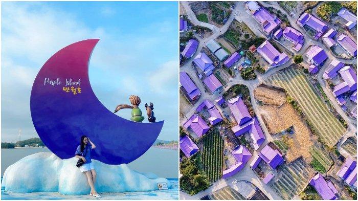 Mengenal Purple Island, Tempat Wisata Baru di Korea Selatan yang Viral di Medsos