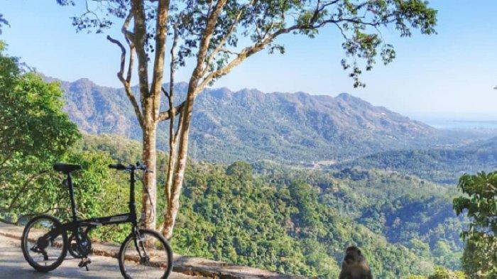 TRAVEL UPDATE: Pusuk Pas, Tempat Berburu Durian di Lombok yang Tawarkan Pesona Alam Memukau