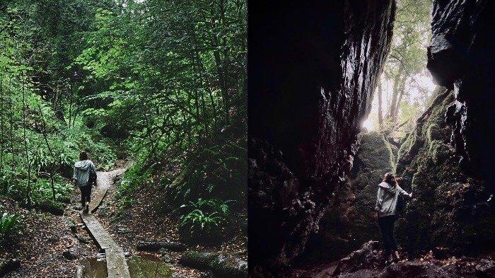 Fakta Unik Puzzlewood, Hutan di Inggris yang Jadi Inspirasi Film The Lord of the Rings