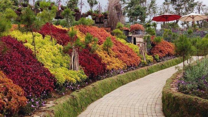 Ragam bunga di Rainbow Garden