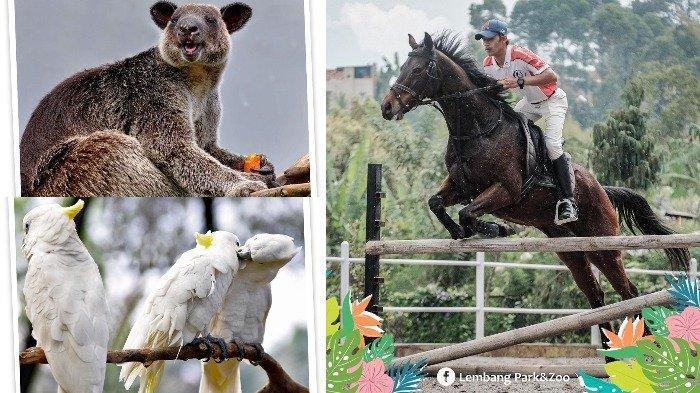 Promo Beli 2 Gratis 1 Tiket Lembang Park & Zoo, Ketahui Juga Aturan Berkunjung saat Pandemi