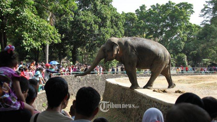 Tempat Wisata Kebun Binatang Ragunan masih tetap menjadi tempat wisata favorit wisatawan lokal.