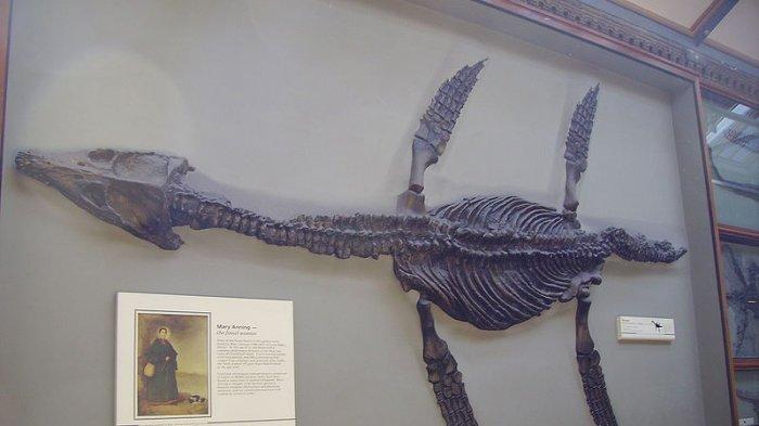 Kisah Sedih Mary Anning, Pemburu Fosil yang Tersisih dari Buku Sejarah