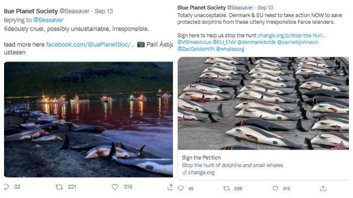 Ribuan lumba-lumba terbunuh di tepi pantai