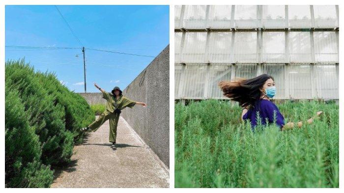 5 Spot Foto Instagramable di Rumah Atsiri, Ada Green House, Museum hingga Rosemary Ramp
