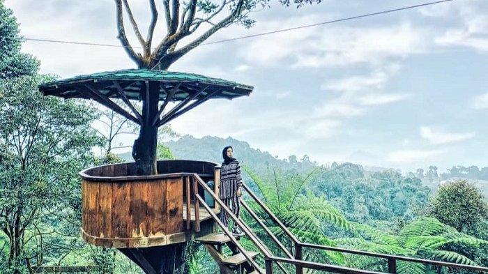 Spot rumah pohon di Bukit Halimun Bogor.
