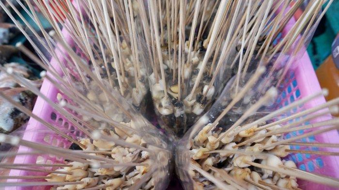 Saang, kudapan khas Filipina yang dibuat dari potongan daging kerang.