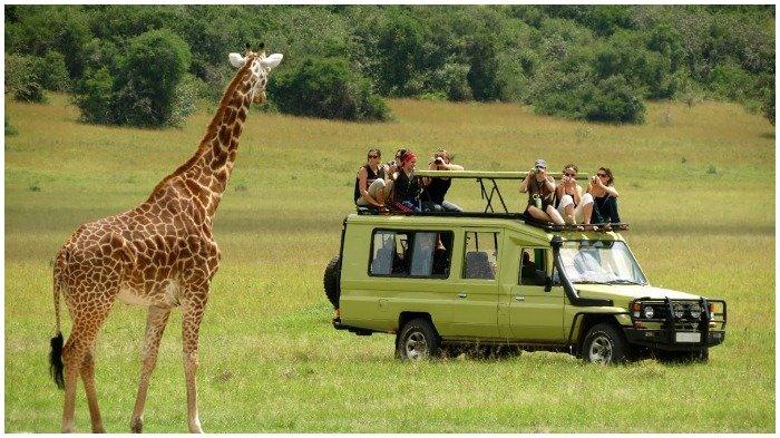 Safari di Afrika
