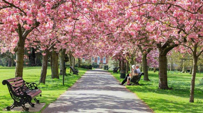 5 Tempat Terbaik Menikmati Keindahan Bunga Sakura Selain Jepang, Satu di Antaranya Ada di Indonesia