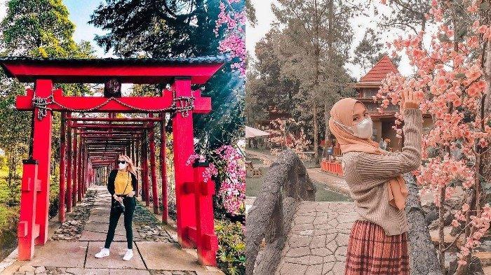 Sejumlah spot foto Instagramable di Sakura Hills Tawangmangu.