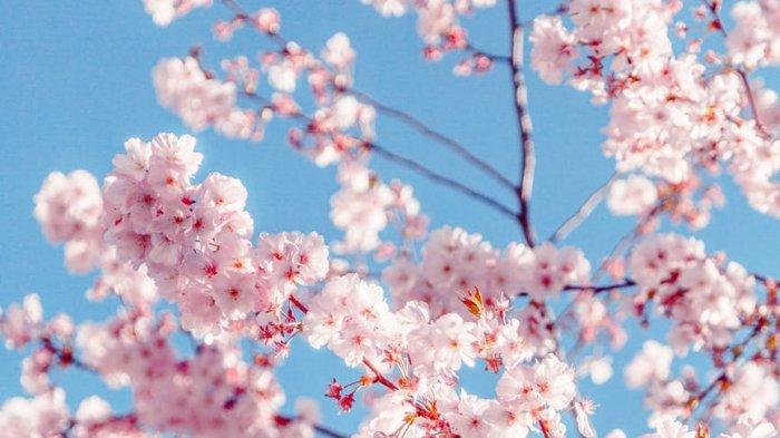 Perketat Aturan, Mulai 3 April 2020 Ini WNI Tidak Diperbolehkan Masuk Jepang