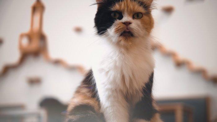 Kucing di Pawpaw Cafe