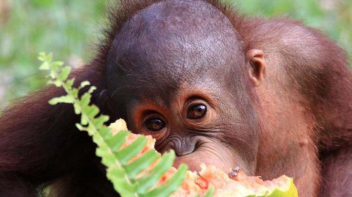 8 Wisata Favorit di Kutai Kartanegara, Tengok Ribuan Koleksi Flora Fauna