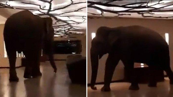 Mengenal Natta Kota, Seekor Gajah yang Masuk Hotel Bintang Lima dan Viral di Medsos