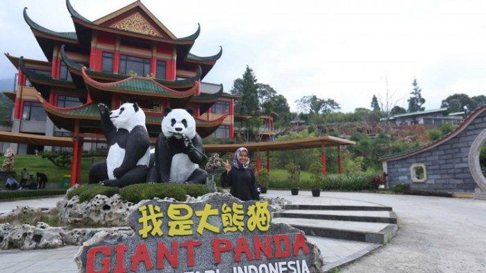 Asyiknya Liburan ke Istana Panda, Bisa Lihat Aksi Hu Chun dan Cai Tao yang Menggemaskan