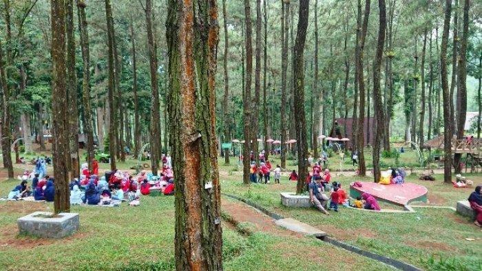 TRAVEL UPDATE: Serunya Bermain di Sikembang Park, Tempat Wisata Alam Seru di Batang