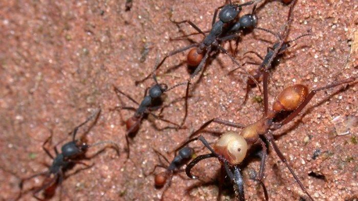 5 Serangga Paling Mematikan yang Hidup di Bumi, Nomor 1 Banyak Ditemukan di Indonesia