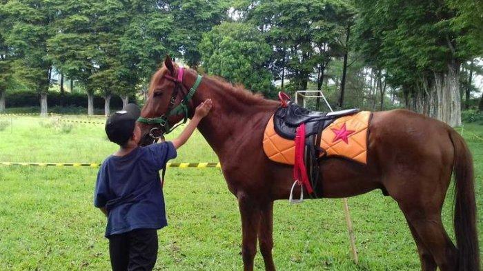 Mau Wisata Berkuda di Bogor? 5 Tempat Ini Bisa Kamu Kunjungi