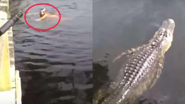Asyik Berenang, Seorang Gadis Muda di Florida Segera Diteriaki Orang, Lihat Ada Buaya Mendekat