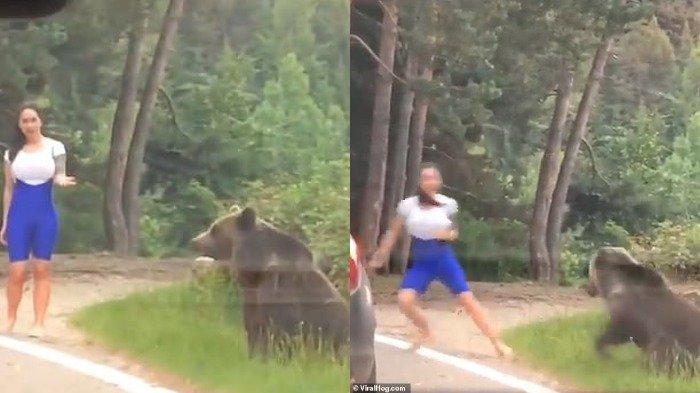 Nekat Dekati Beruang Liar untuk Berfoto, Wanita Ini Hampir Diterkam