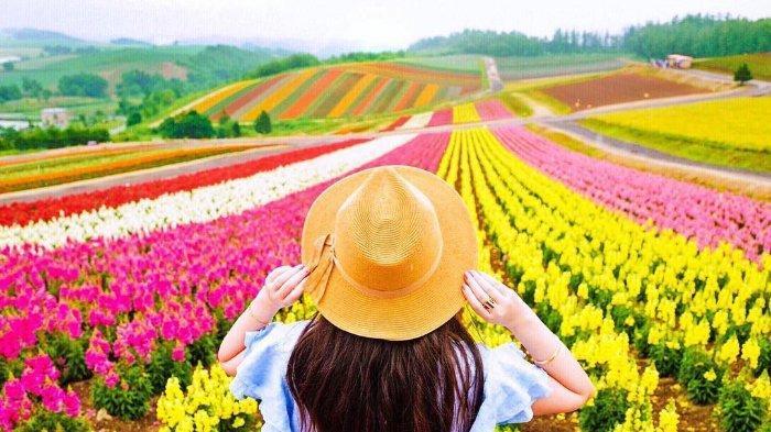Kebun Bunga Warna-Warni di Hokkaido Jepang