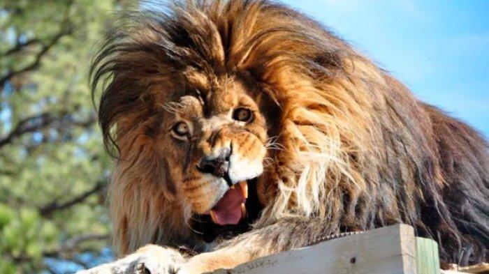 Hewan Ini Perlihatkan Ekspresi Sangat Konyol Saat Difoto