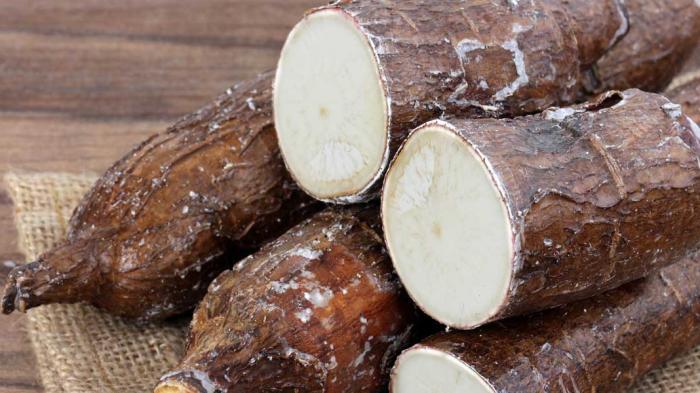 Banyak Tumbuh di Indonesia, Berikut 5 Manfaat Mengonsumsi Singkong untuk Kesehatan