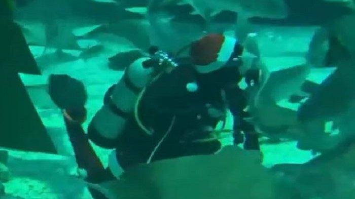 Meriahkan Momen Natal, Sinterklas Akan Menyelam dan Beri Makan Hiu di Akuarium Terbesar