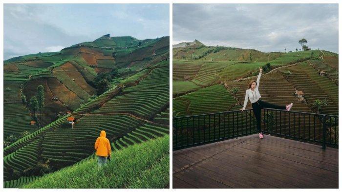 Potret Keindahan Terasering Panyaweuyan Majalengka, Hamparan Sawah Bertingkat yang Instagramable