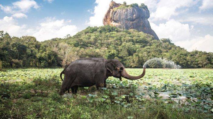 13 Fakta Unik Sri Lanka, Negara yang Dijuluki Tetesan Air Mata India