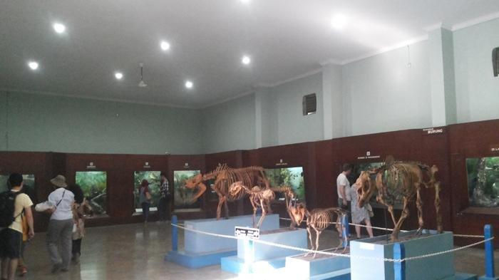 Harga Tiket Masuk Museum Zoologi Bogor Terbaru 2021, Wisata Bersejarah di Kawasan Kebun Raya Bogor