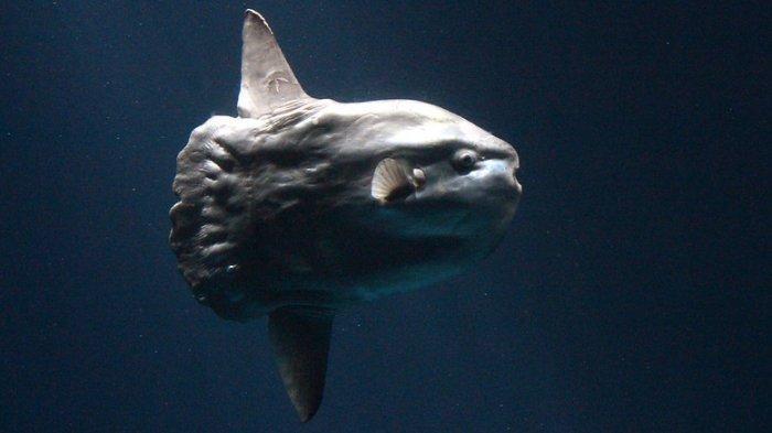 Banyak Dapatkan Laporan Hiu yang Ternyata Ikan Raksasa, Polisi Minta Warga AS Berhenti Menelepon